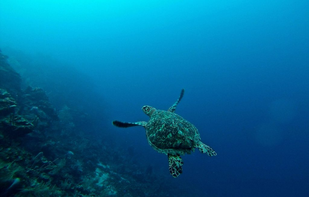 roatan, one of the best places to learn to scuba dive