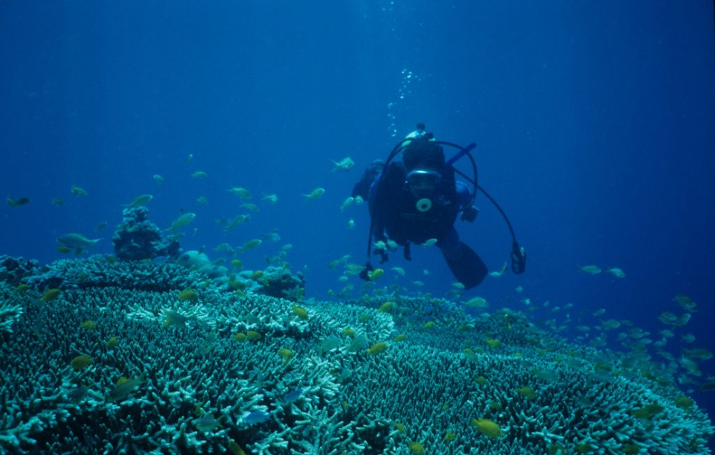 diving off cebu philippines