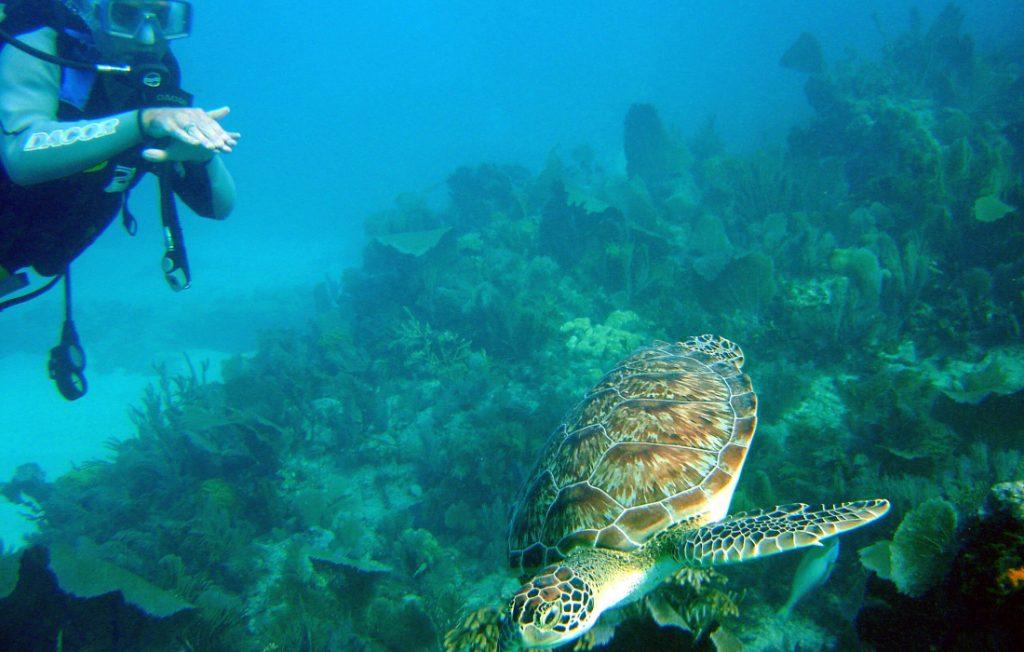 diving in florida keys