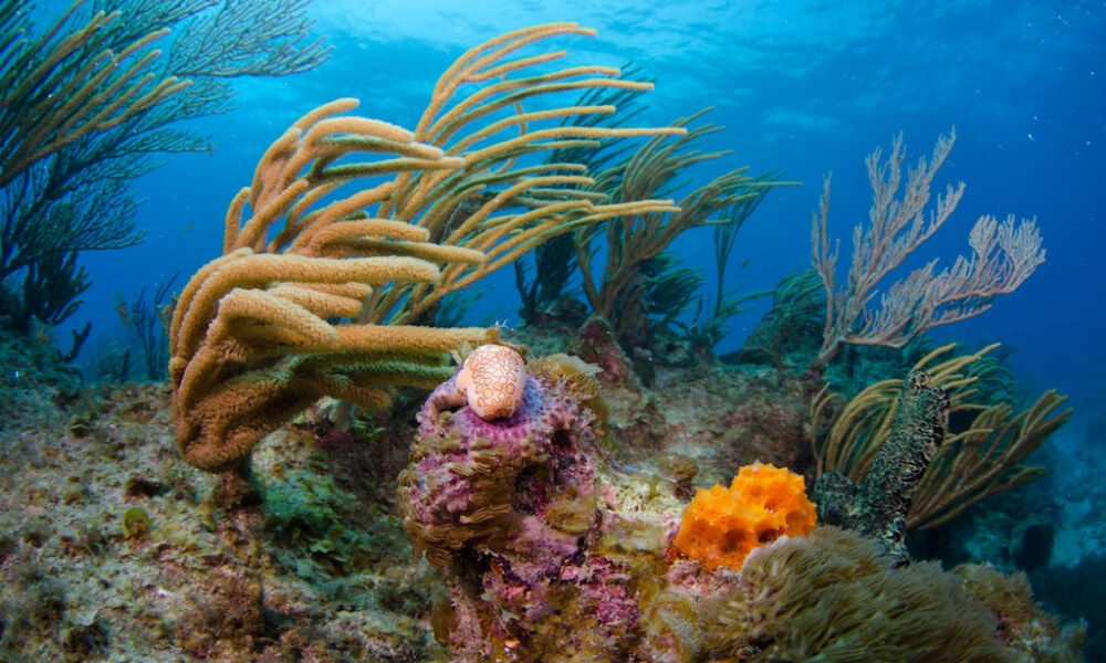 cayman islands diving