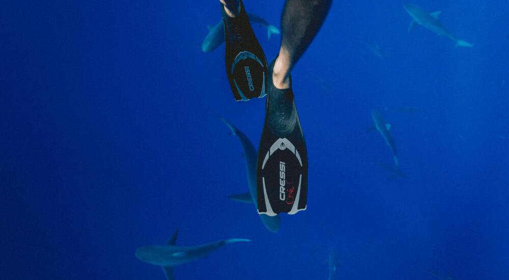diver and sharks