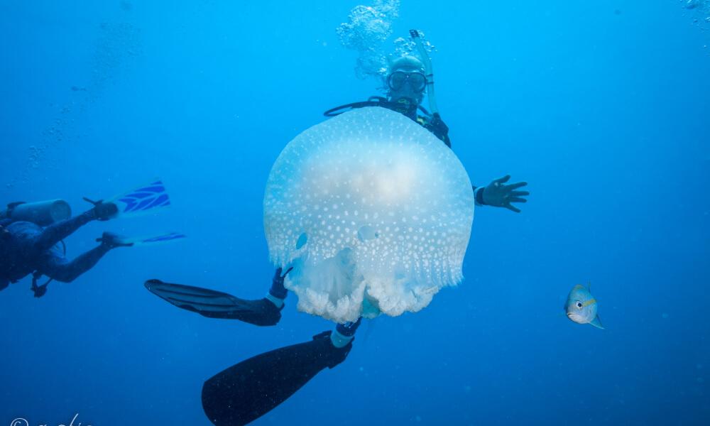 jardines de la reina, a great winter scuba diving destination
