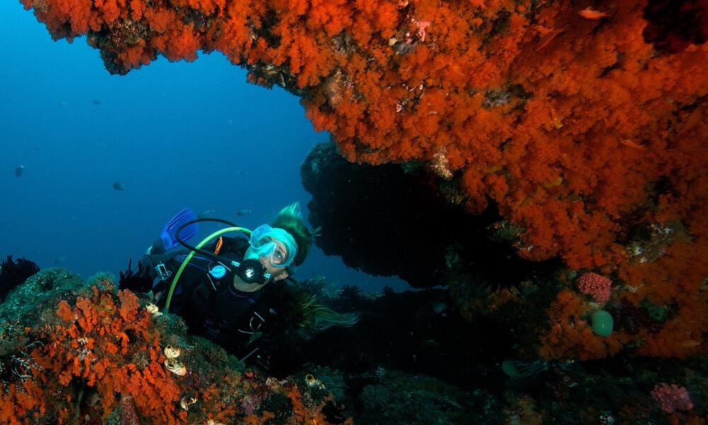 raja ampat indonesia, one of the best winter scuba diving destinations