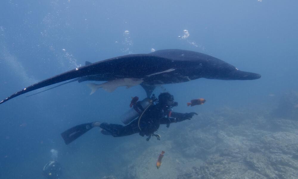 socorro island, one of the best winter scuba diving destinations