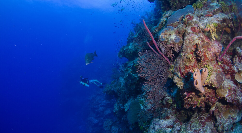 cayman island diving