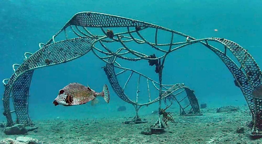zoe metal reef