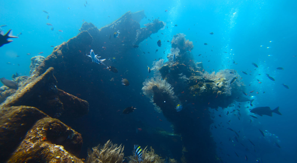 USAT Liberty, one of the most famous shipwrecks in the world