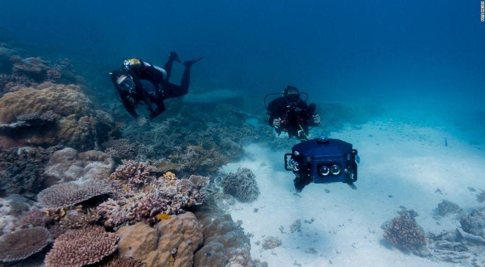 erika woolsey virtual dives