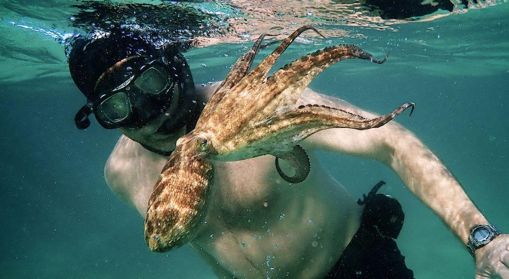 my octopus teacher documentary
